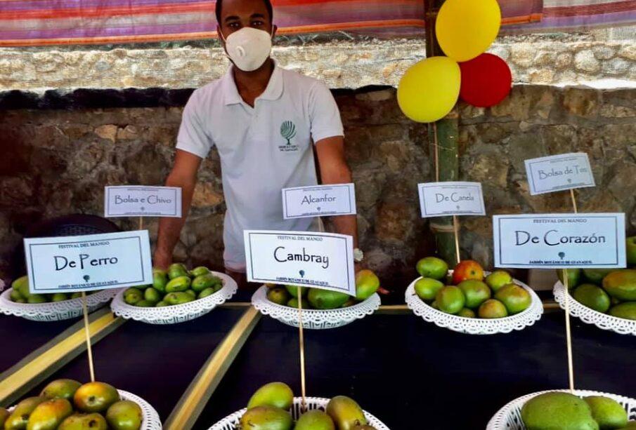 Festival De Mango - Noticias de Ecuador