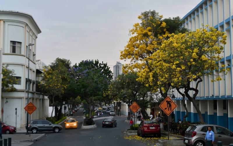Guayacanes amarillos - Noticias de Ecuador