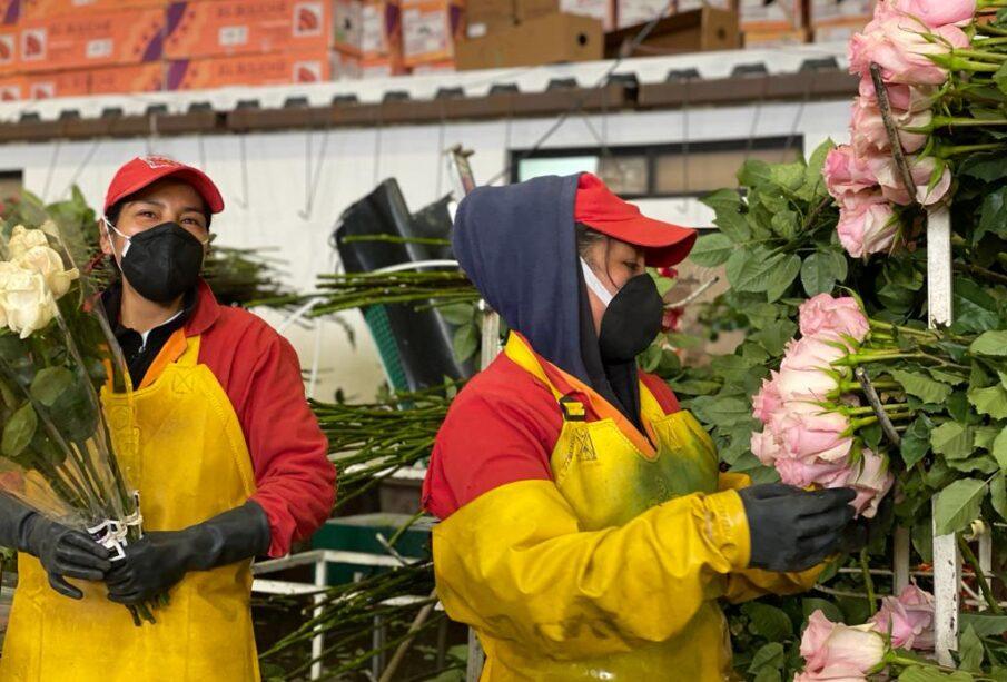 Sector florícola, San Valentín - Noticias de Ecuador