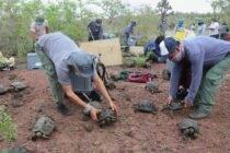 Parque Nacional Galápagos libera 191 tortugas juveniles - Noticias de Ecuador