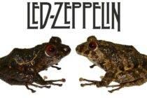 Led Zeppelin, la nueva rana en Ecuador - Noticias de Ecuador